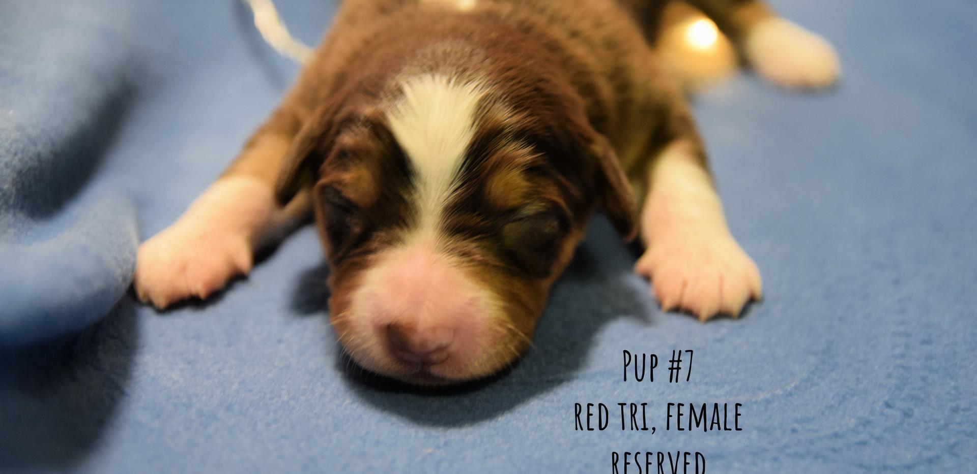 pup7-1w.jpg