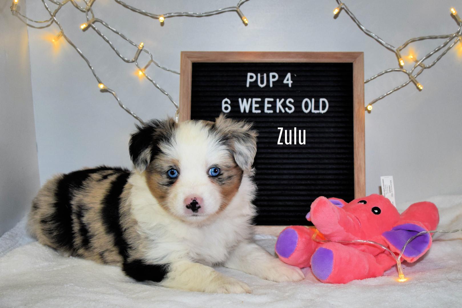 pup4-6w.jpg