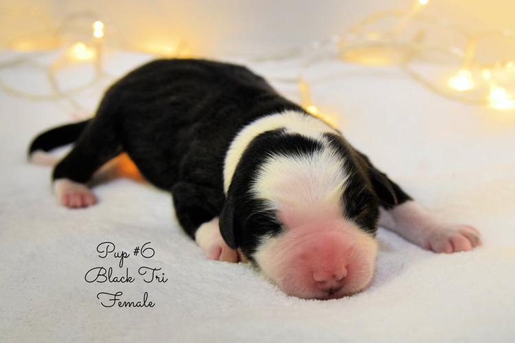 pup6-birth.jpg