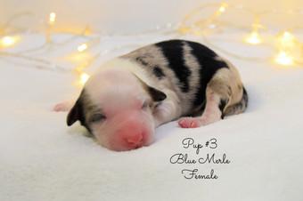 pup3-birth.jpg