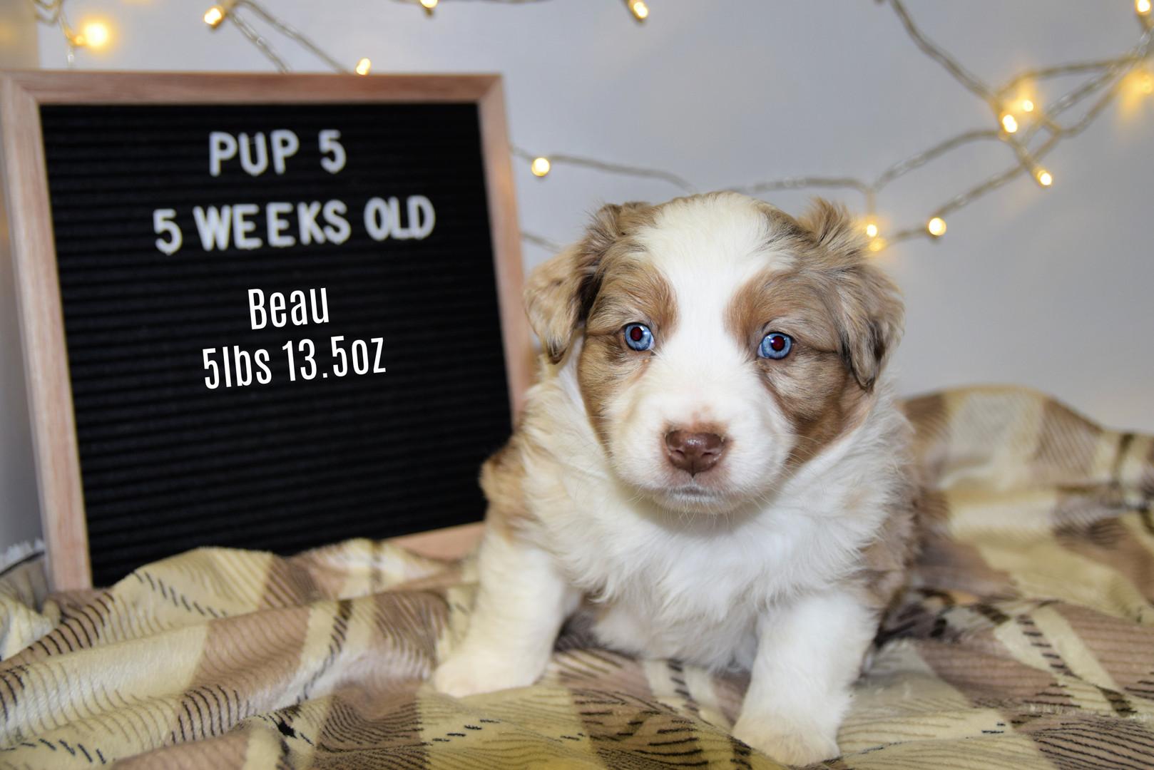 pup5-5w.jpg