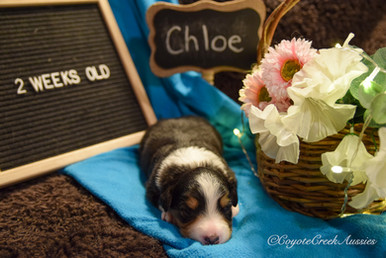 2 weeks old