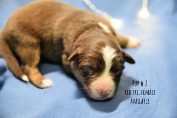pup2-1w.jpg