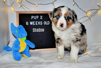 pup2-6w.jpg