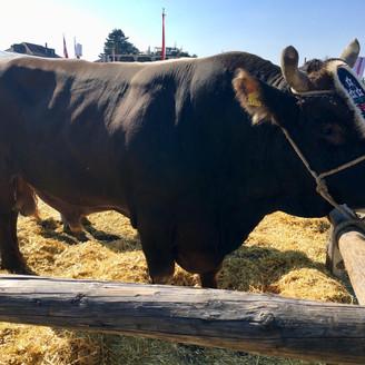 Stierenmarkt 2019, Zug