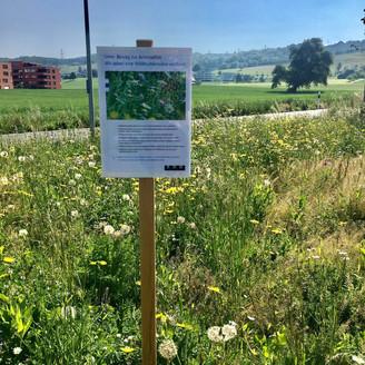 Zug loves its biodiversity