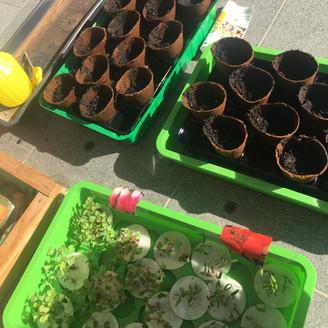Plant nursery - second phase