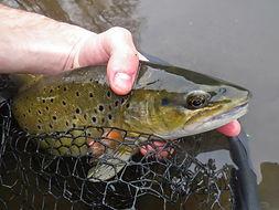 pêche_en_pays_gentiane___les_poissons.jp