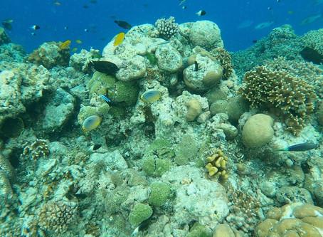 Drift Snorkeling in the Seychelles