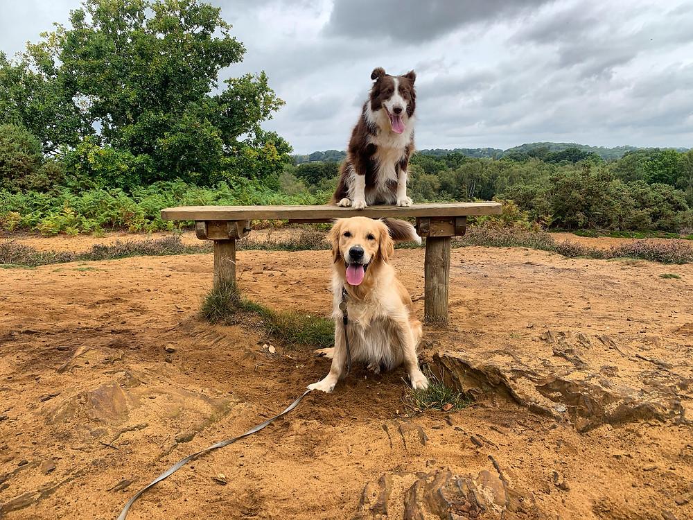 Kingsley Common Dog Walks Alton Hampshire