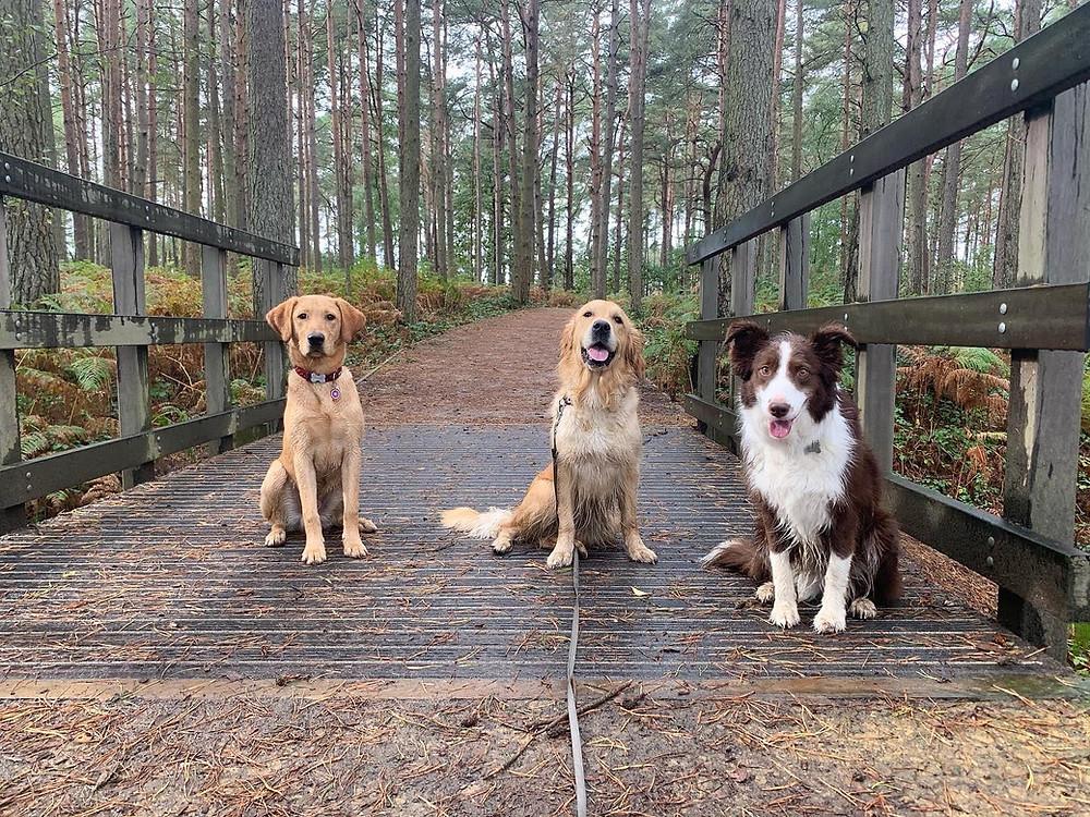 Hogmoor Inclosure Dog Walks Alton Hampshire