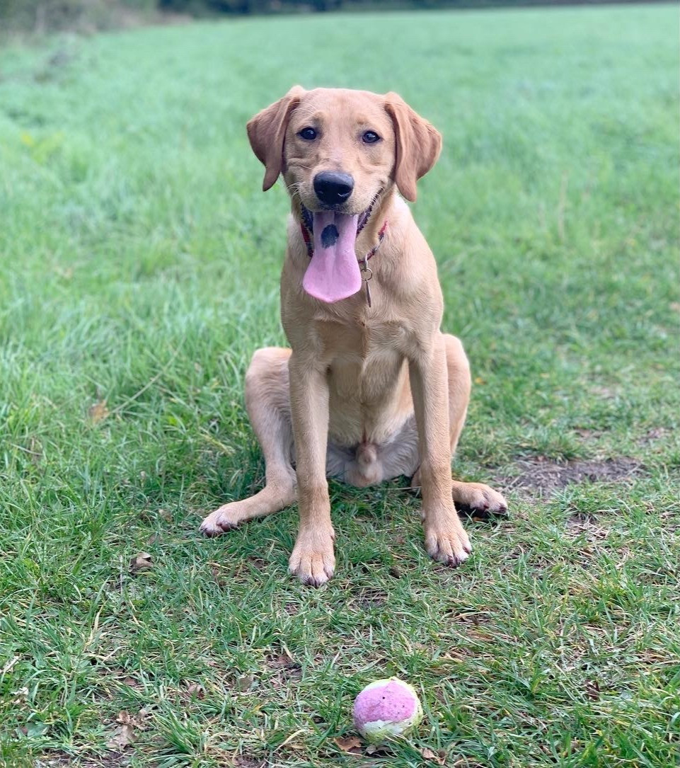 Chawton Park Dog Walks Alton Hampshire