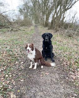 Alton, Hampshire. Dog Walker