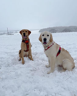 Alton Hampshire, Dog Walker