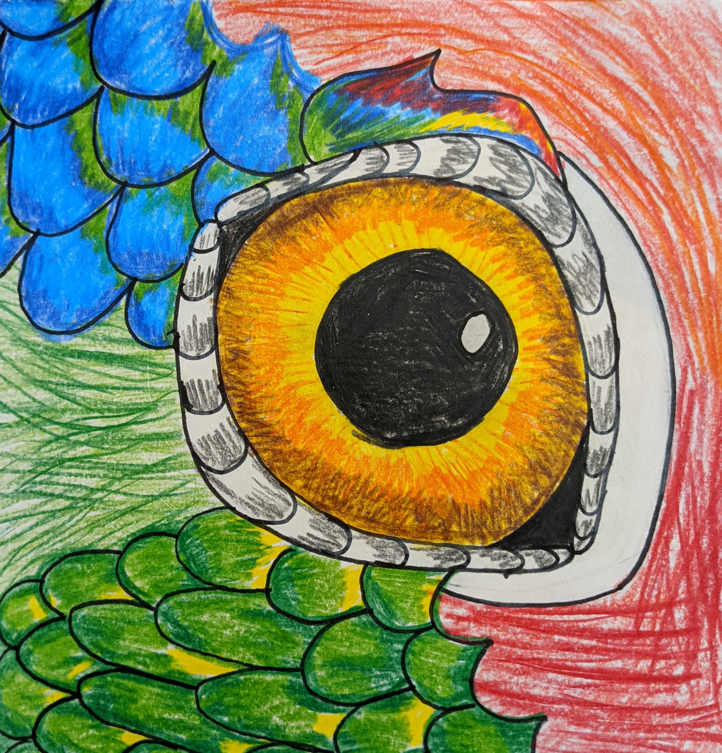 Red Crowned Amazon Parrot Eye