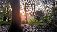 A wooded area at sunset.