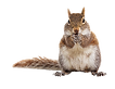 squirrel_PNG15816-1.png