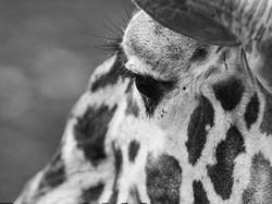 Olmense zoo