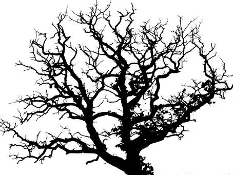 B.R.A.T.S. The Old Oak Tree