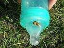 ladybugs-on-baby-bottle.jpg