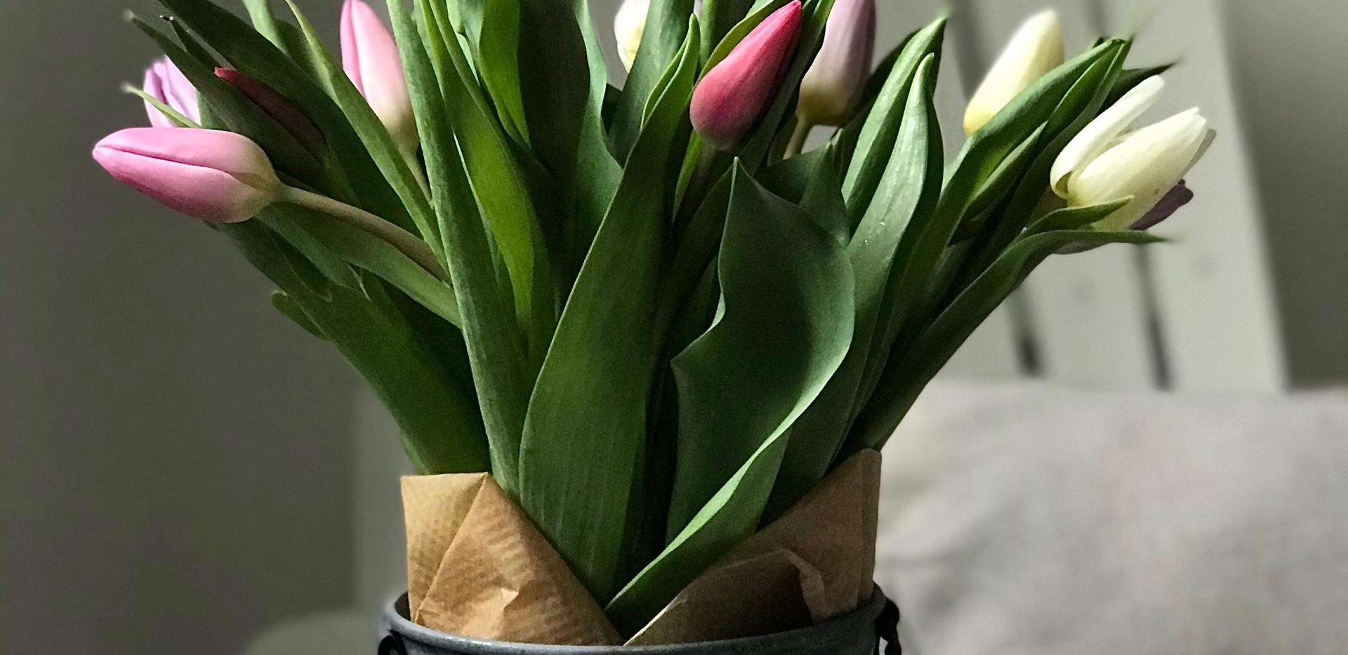 Tulips in flower pot