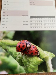 Calendar Preview Pics!