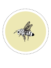 Bienen_Facts_Icons_Bienenkönigin.png
