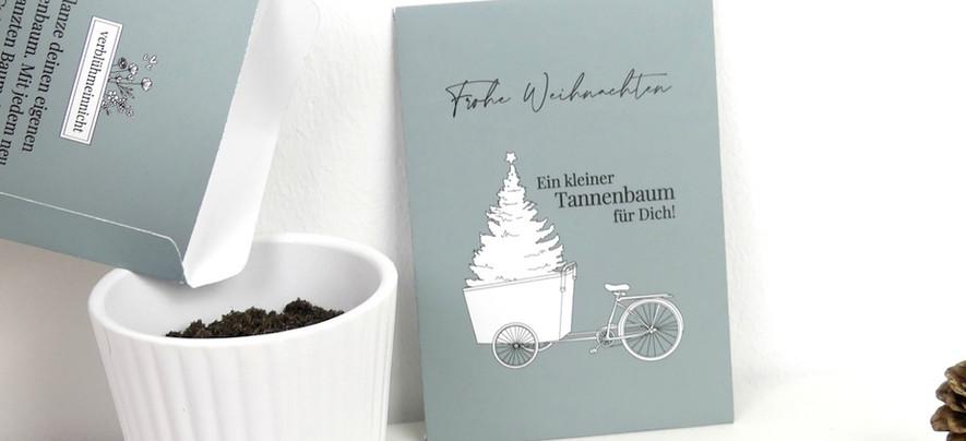 Tannenbaum-Aussaat.JPG
