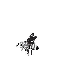 Zeichnung Biene.png