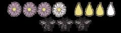 Sonnenblume_Nektar und Pollen.png