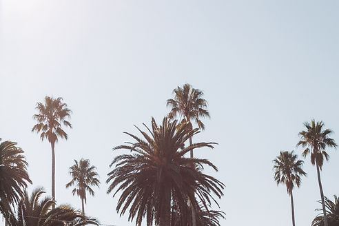 Palm Trees | Called To Create | Seventh Ave Creative