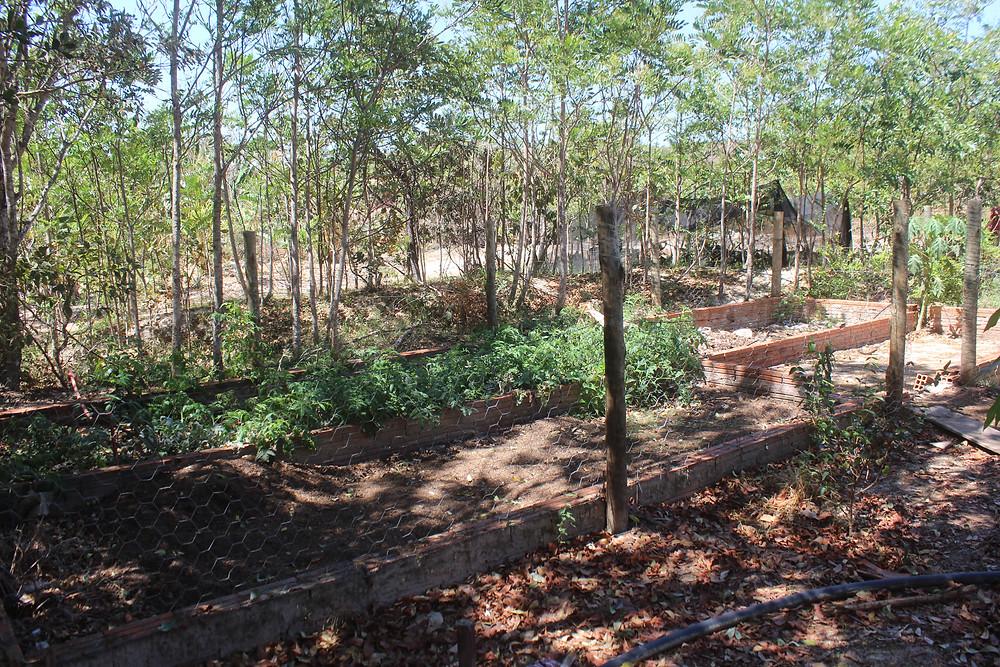 Cachoeira do Abade prepara compostagem e tem horta natural orgânica