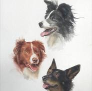 3 dogs Watercolour