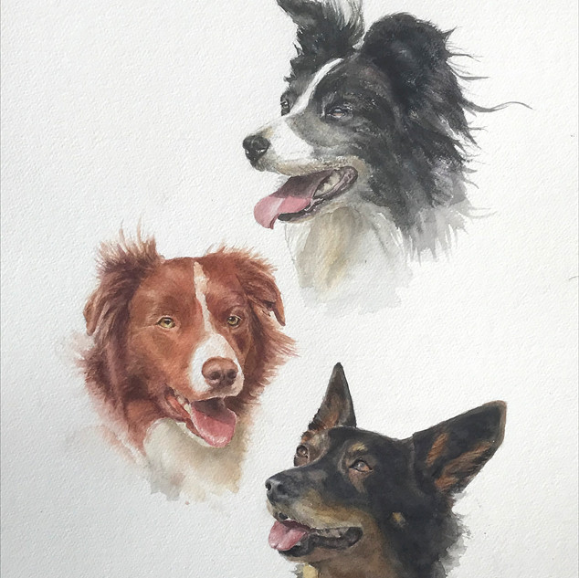3 dogs Watercolour
