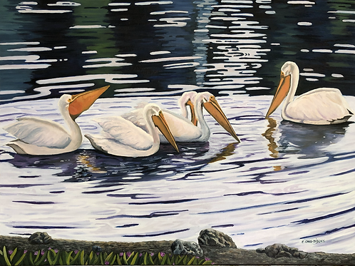 Pelicans on the Slough