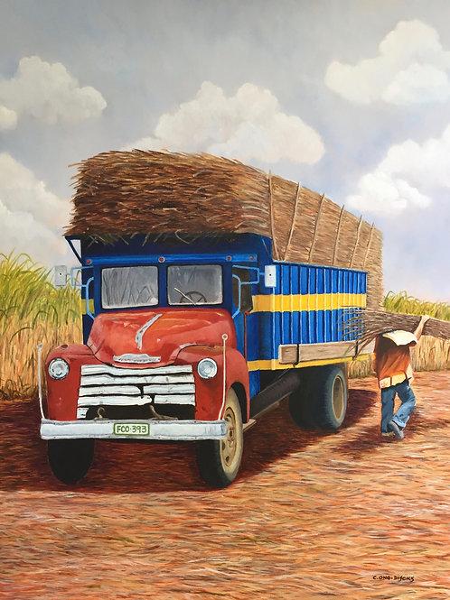 Sugarcane Season