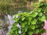 Panacea gardens