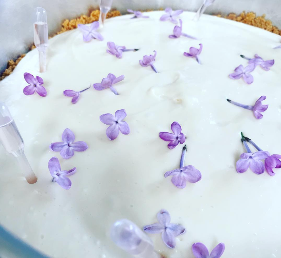 Honey & Lilac Cheesecake