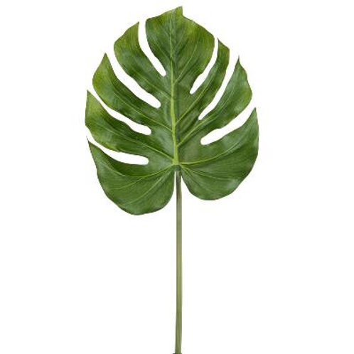 folha monstera