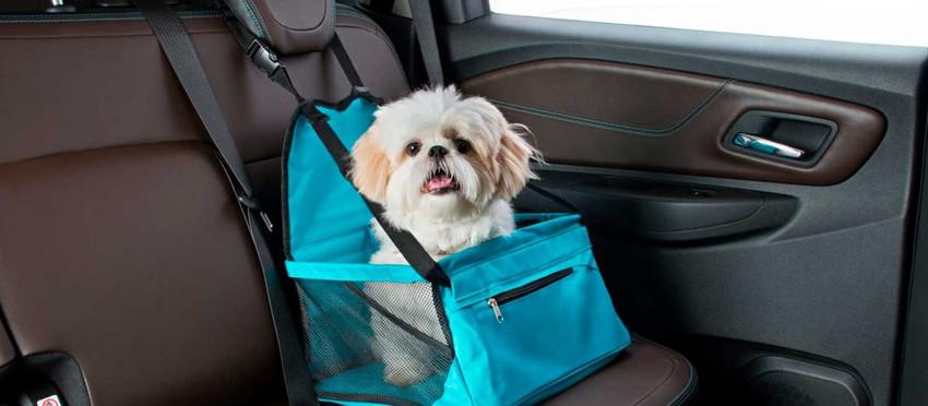 Como transportar seu pet no veículo corretamente?