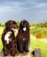Holly&Chester2.jpg