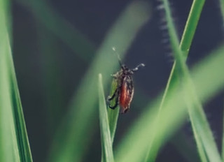 Bug Off:  Repelling Ticks, Stings & Other Things