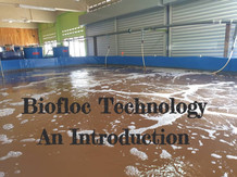 INTRODUCTION TO BIOFLOC SYSTEM