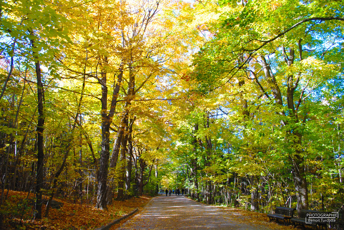 Sentier du Mont-Royal Trail