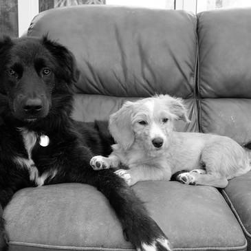 Kodi & Baxter