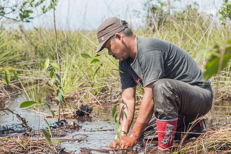 BNF copy_0004_Planting in Sebangau Fores
