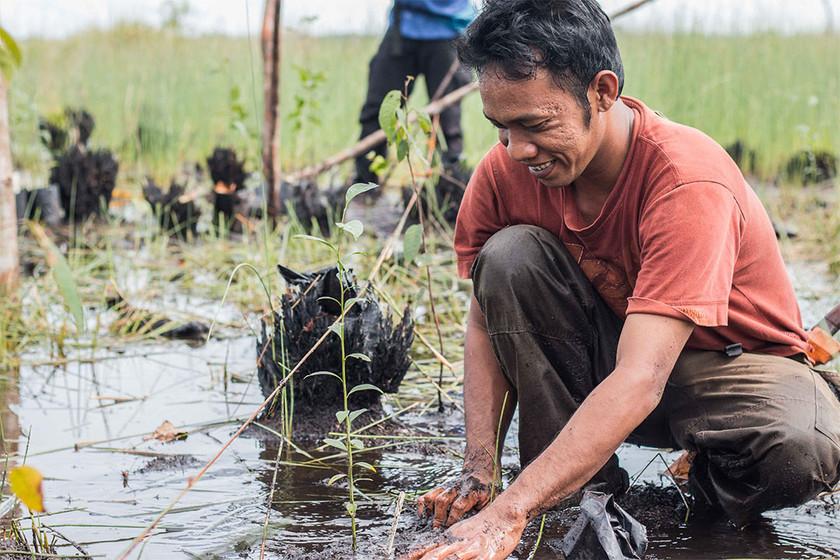 BNF copy_0003_Planting in Sebangau Fores