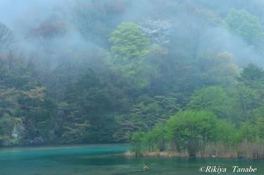 「春雨に薫る」 長野県・阿智村