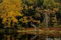「静かな季節(とき)」 ・長野県・志賀高原