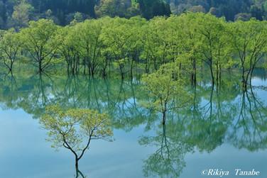 「風・薫る」 山形県・飯豊町・白川湖